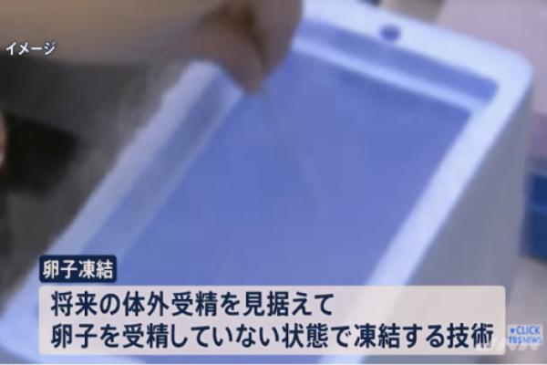 TBSニュース23にて 卵子凍結に関する特集が放送されました